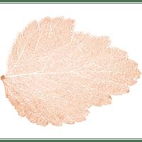 lugar-americano-autumn-leaf-da-lyor-plastico-rose-7433-lugar-americano-autumn-leaf-da-lyor-plastico-rose-7433-59223-0
