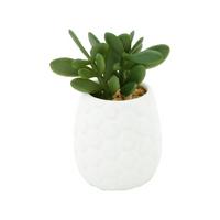 mini-vaso-hives-jade-succullent-da-urban-6-x-11-5-cm-porcelana-42137-mini-vaso-hives-jade-succullent-da-urban-6-x-11-5-cm-porcelana-42137-60029-0